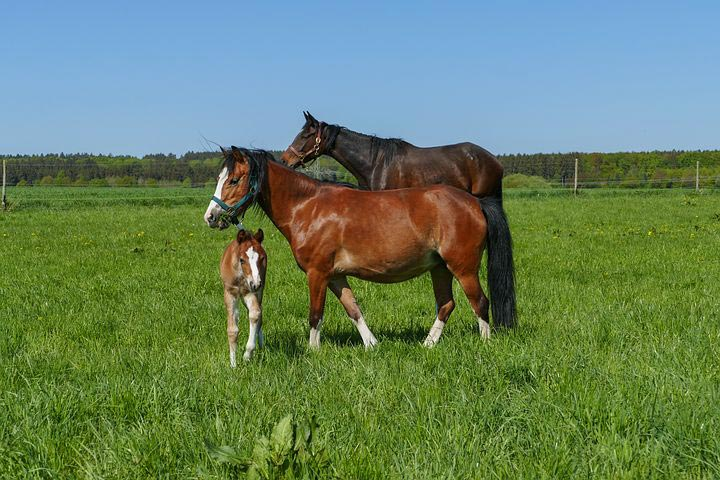 Mare and Foal Sanctury